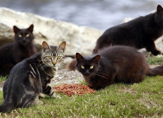 Community-feral-cats