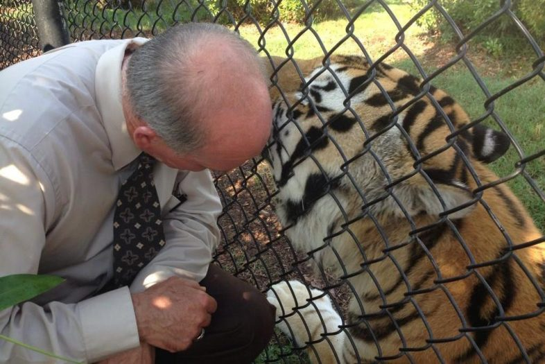 Ask Mike The Tiger S Personal Vet Dr David Baker The