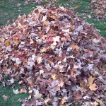 Pile-of-leaves