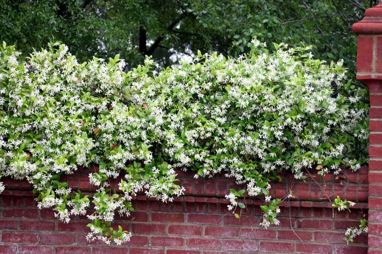 lsu students call for removal of confederate jasmine from