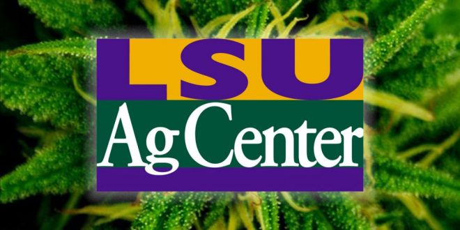 LSU AgCenter Flooded With Job Applications, Tips for Growing Marijuana